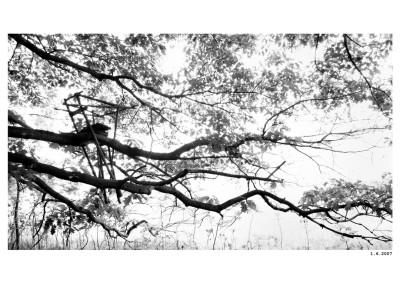 2007_06_01_Posed