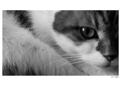 2007_07_15_Garfield