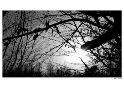 2008_02_17_Chuj