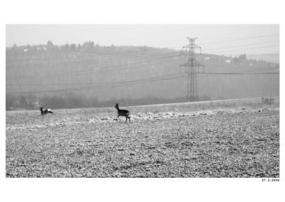 2008_03_27_Srny