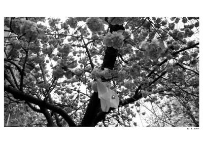 2008_04_22_Karlin