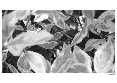 2008_05_11_Piskle